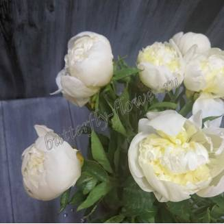 "Bouquet of white peonies ""The Temptation of Eden"""