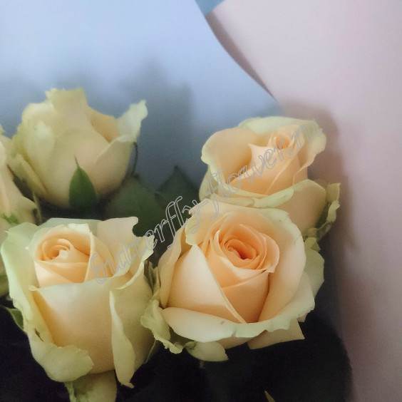 """Bouquet of 19 cream roses in the package """"Gentle morning"""""""
