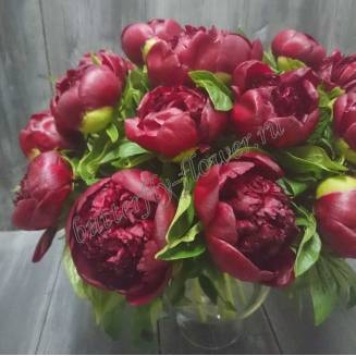 "Bouquet of burgundy peonies ""Red Charm"""