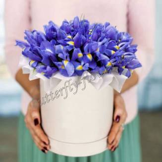 "Bouquet of irises in white designer box ""Indigo"""