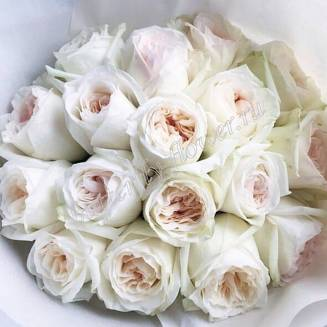 "Bouquet of 17 white peony roses White O'hara in the package ""Scarlett"""