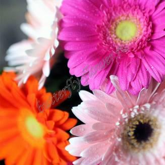 "Bouquet of different color gerberas ""Rainbow Dreams"""