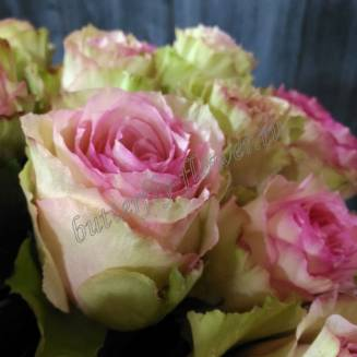"Bouquet of creamy pink roses ""Esperance"""
