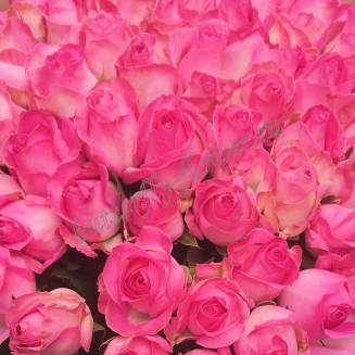 "Bouquet of 71 pink Russian roses 60cm ""Candy-71"""