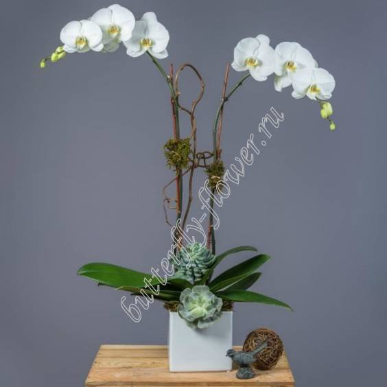 "Arrangement on the table ""Orchid Garden"""