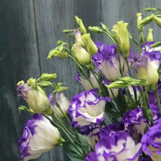 "Bouquet of purple eustoma (lisianthus) ""Storm cloud"""