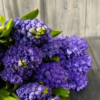 "Bouquet of hyacinths ""Aroma of spring"""