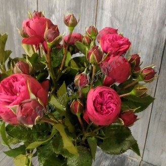 "Bouquet of red spray peony roses ""Red Piano"""