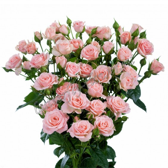 "Bouquet of pink spray roses ""Lidia"""