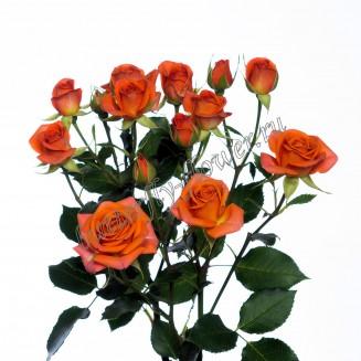 "Bouquet of orange spray roses ""Babe"""