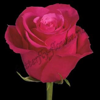 """Bouquet of crimson premium roses """"Cherry Oh"""""""