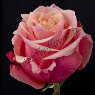 "Bouquet of peach premium roses ""Cherry Brandy"""