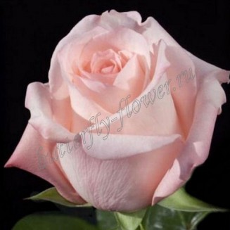 """Bouquet of pale-pink roses """"Engagement"""""""