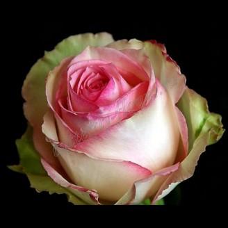 """Bouquet of pink premium roses """"Esperance"""""""