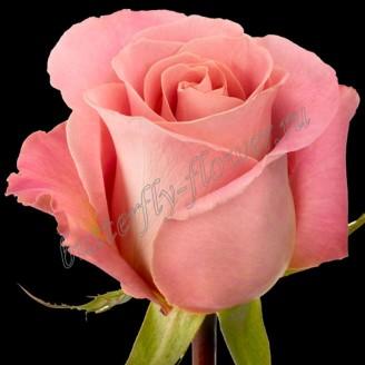 "Bouquet of pink premium roses ""Hermosa"""