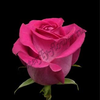 """Bouquet of crimson premium roses """"Topaz"""""""